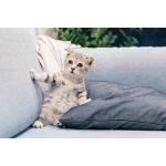 Як прибрати сліди котячої сечі на меблях